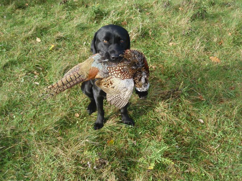Bird retrieved and beautifully delivered after final whistle