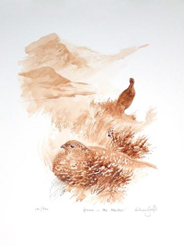 Grouse in the heather - By Will Garfit